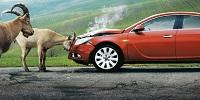 авария автомобиль и козел-каско-франшиза