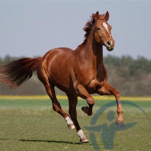 Страхование лошадей