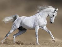 Страхование в конном спорте