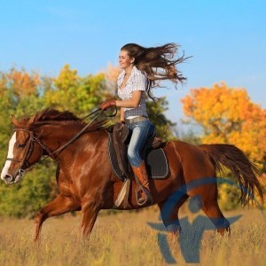 страхование прогулок на лошадях