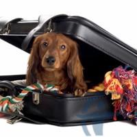 Страхование животных при поездке за границу