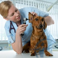 Комплексное страхование домашних животных