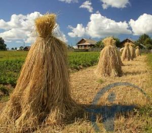 Страхование имущества фермеров
