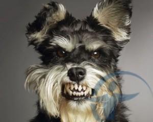 Страхование гражданской ответственности владельцев собак