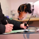 Страхование животных