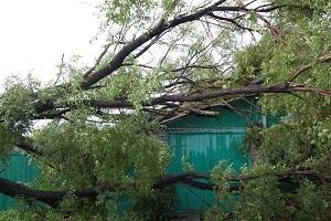 дерево упало на гараж